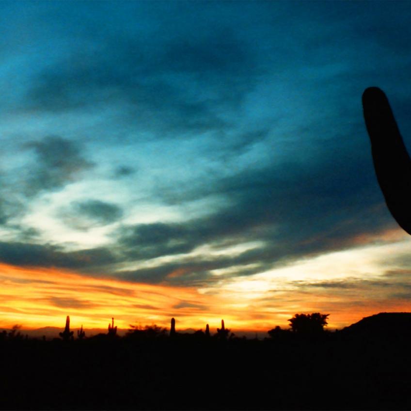 Omaha Photography | Arizona Cactus